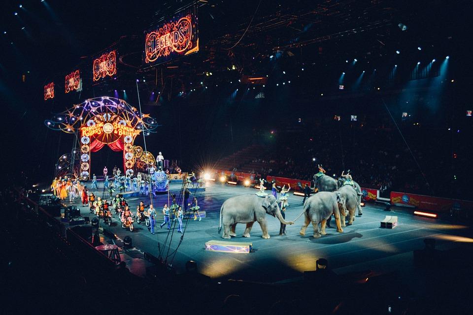 Watch a Circus Circus Performance